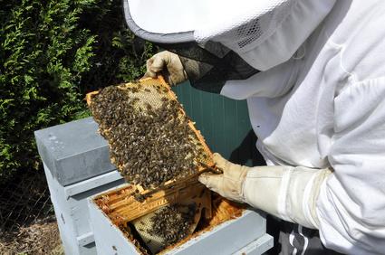 apiculteur metier