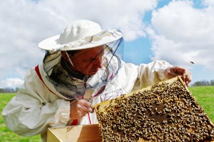 miel des abeilles la ruche la soci t des abeilles miel in france. Black Bedroom Furniture Sets. Home Design Ideas